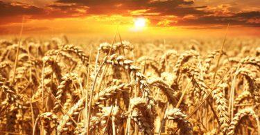 Trading grano