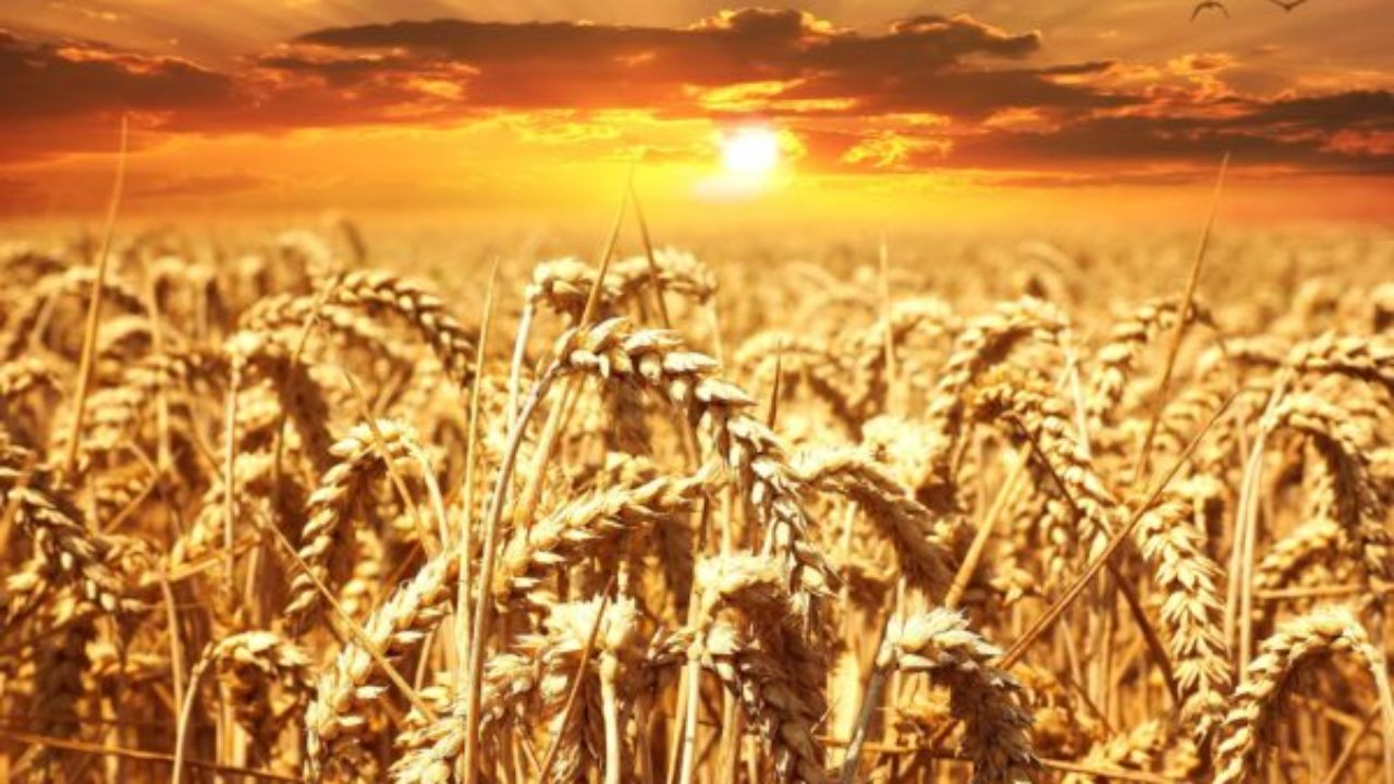 modi per guadagnare denaro online legittimamente i mercati del trading del grano